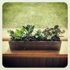 {my kitchen window succulents & DIY box}