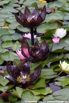 Monet's Waterlillies