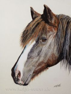 Pferdezeichnungen und Pferdeportraits in Pastellkreide und Kohle - Auftragsarbeiten: www.katja-sauer.de   Horse paintings and horse portraits in soft pastels and charcoal - commissioned works: www.katja-sauer.de