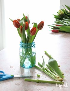 Quick and Simple Guide for Arranging Tulips