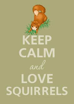 Keep calm and love squirrels by Agadart on Etsy