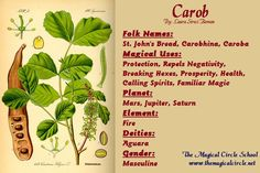Carob Magical Properties - The Magical Circle School - www.themagicalcircle.net