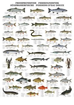 North American Fresh Water Fish