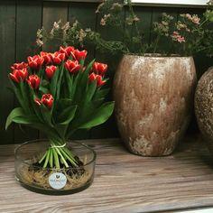 Bulb Bouquet.com