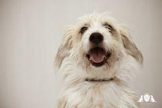 Happy Dog Day Spa   Nyon, Switzerland  Toilettage pour chiens et accessoires pour animaux.  Rue Juste Olivier 3 1260 NYON   022 362 2154 www.happydogdayspa.ch