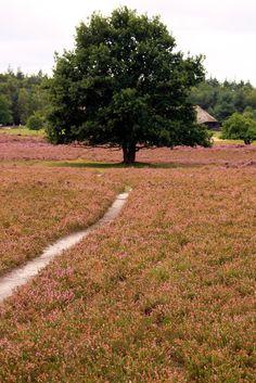 Ermelose heide, the Netherlands