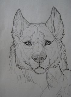 Ideas For Tattoo Wolf Realistic Beautiful Wolves Ideas For Tattoo Wolf Realistic Beautiful You can find Wolf drawing. Animal Sketches, Drawing Sketches, Art Drawings, Drawing Drawing, Tattoo Sketches, Drawing Ideas, Drawing Tips, Pencil Drawings, Drawing Hair