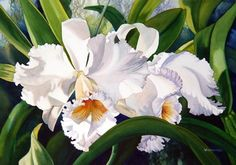 Nancy Wernersbach, Portfolio - Art League of Nassau County Watercolor Mixing, Watercolor Flowers, Watercolor Paintings, Orchid Drawing, Belleza Natural, Orchids, Pictures To Paint, Artist Painting, Flower Art