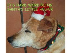 Old boy Oscar sleeping through all the Christmas festivities :)