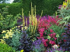 A colourful herbaceous border. Really good advise on how to keep an interesting border from april - september, and use grasses and ferns to add interest the rest of the year. Kalanchoe Blossfeldiana, Edging Plants, Border Plants, Colorful Plants, Colorful Garden, Beautiful Flowers Garden, Beautiful Gardens, North Facing Garden, Herbaceous Border