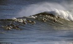 Every dolphin's gone surfin'! Stunning pictures as hundreds play among some monster waves