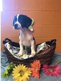 Scorpio #Puppies #Adopt #AllPetsClub #Furbaby