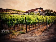 A beautiful Livermore Winery