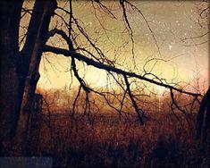 Fine Art Landscape Photography: November