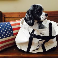 The L.L.Bean Boat and Tote – designed to carry all the essentials.  (Photo via Facebook: Julie P.)