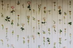 love this idea for a cool backdrop - flowers taped to the wall with washi tape!