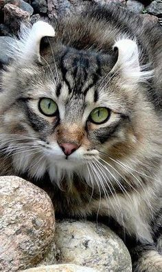 Wow! This cat looks a lot like one of ours! A beauty!