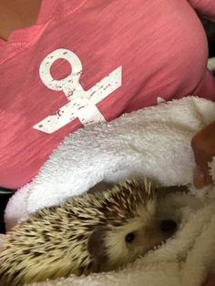 Hedgehog Bath Time Tips & Tricks - Heavenly Hedgies Hedgehog Bath, Bath Time, Heavenly, Daisy, July 5th, Pets, Animals, Future, Animais