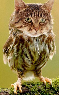 ふくろう=かわいい、猫=かわいい。合体するととにかくやばいことがわかる26枚の画像