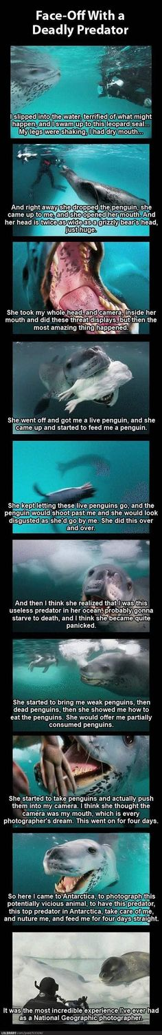 Amazing leopard seal interaction