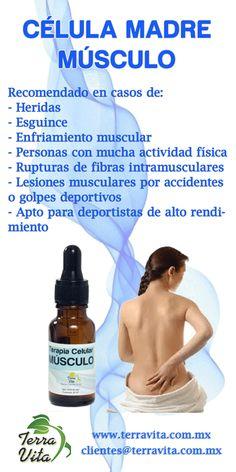 Celula Madre Musculo