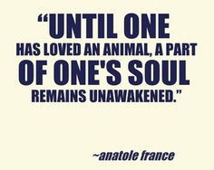 UNtil One has loved an animal #animalquotes