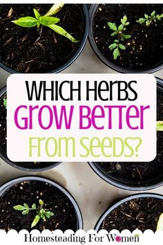 Which Herbs Grow Better From Seeds? Or is it better to buy plants? I love this idea!
