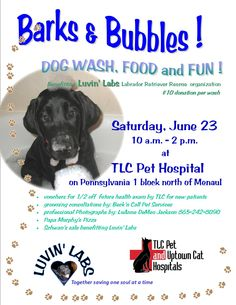 Calling all dirty dogs pet wash fundraiser cool fundraising calling all dirty dogs pet wash fundraiser cool fundraising ideas pinterest dog fundraising and shelter solutioingenieria Gallery