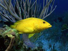 Colorful Fish | Colorful Fish Wallpaper