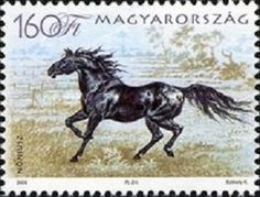2006 Horse Breeds