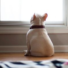 Waiting for my humans 💗