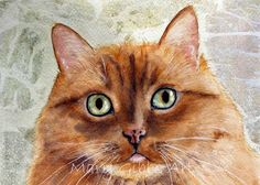Cats | Mary Gibbs Art