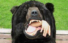 L'orso sacco a pelo, per non essere mai più disturbato