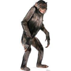 Advanced Graphics Chimpanzee Cardboard Stand-Up