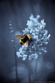 Dreamy bee. by angie rule