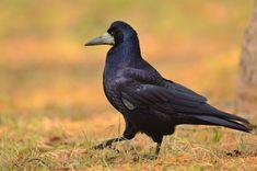 Birds, Animals, Animales, Animaux, Bird, Animal, Animais