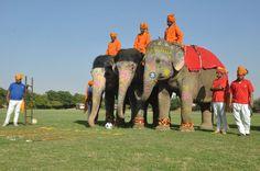 Elephant Polo in India