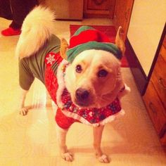 """""""Elves are obviously everyone's favorite, so always have your elf hat at the ready to make sure you're looking ~super~ cute."""" -- Bentley"""
