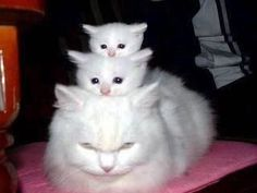 3 stacked cats - although the biggest one doesn't look all that happy about the arrangement...