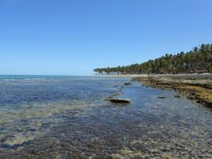 Carneiros Beach. Pernambuco. Brazil.