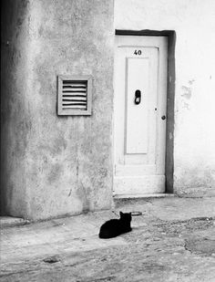 Creator, Mark Smith - This picture stands out to me as the cat wanting to come in and I thought it was cute