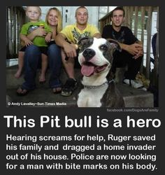 It's not news anymore, but I just found out – back in 2012 Ruger the pibble bit two people who were breaking into the Casteel's house in Valparaiso Indiana. The