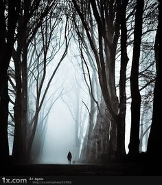alone, black and white, dark, fog, light, photography