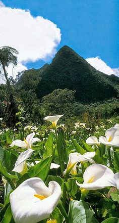 Cheap hotel rooms in Reunion, best prices and cheap hotel rates on Hotellook Beautiful World, Beautiful Places, Beautiful Pictures, Beautiful Flowers, Cocos Island, Island Life, Science And Nature, Amazing Destinations, Belle Photo