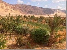 urban desert gardening | jordan | crops between trees