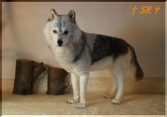 Beautiful Needle felted wolf