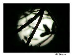 Três coisas não podem ser escondidas por muito tempo: o sol, a lua e a verdade.  Buda 📷giramos.florianopolis_sc Gratidão por tudo Sempre. Conhecer Para Preservar. Cantinhos Encantados.  #floripanativa #floripanativainfo #floripanativatrip #floripa #noite  #noiteboa #ilhadamagia #natureza #nature #viagem #lugar #floripa #florianopolis #lua #luau #nature  #luar #brilho # brilhodoluar #gratidao #universo #vib #obrigadodeus  #florianopolis #santacatarina #brasil #brazil #mundo #sol #turistando…