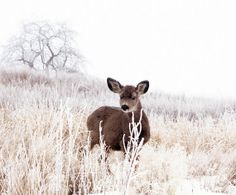 Love It! The Fawn on a Hill Animal Photography Fawn by lucysnowephotography, $20.00