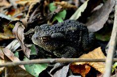 KrokodiLina: nur ein bild {36} Photo And Video, Nature, Animals, Woodland Forest, Pictures, Naturaleza, Animales, Animaux, Animal