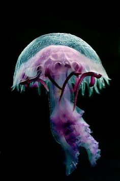 Qualle - Jellyfish You are in the right place about Sealife body adornment Here we offer you the most beautiful pictures about the Sealife quotes you are looking for. When you examine the Qualle - Jel Beautiful Sea Creatures, Deep Sea Creatures, Animals Beautiful, Under The Water, Under The Sea, Underwater Creatures, Underwater Life, Water Animals, Baby Animals